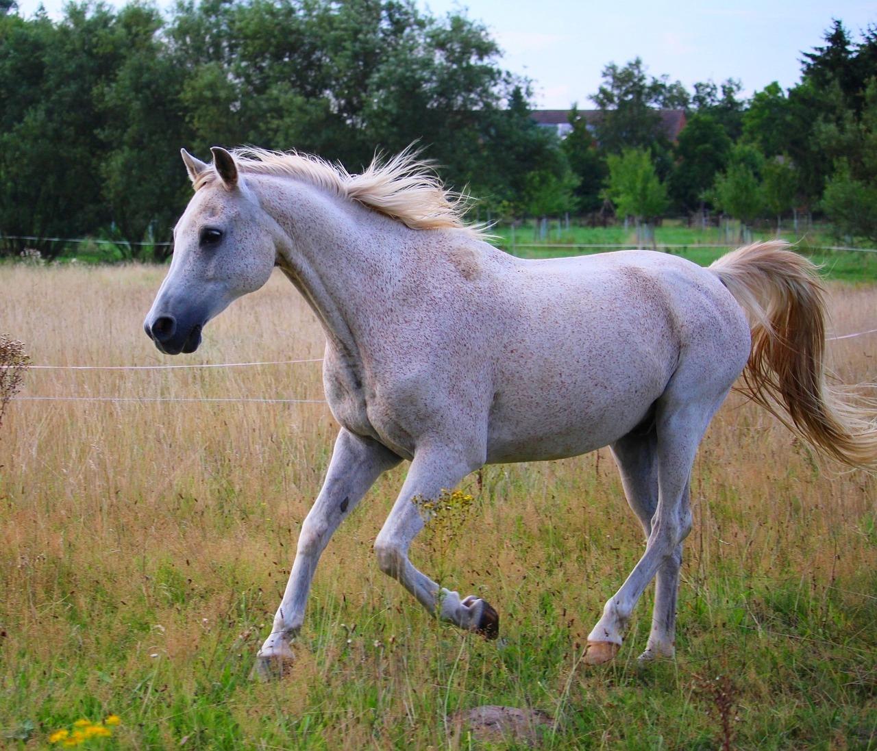 horse-948710_1280