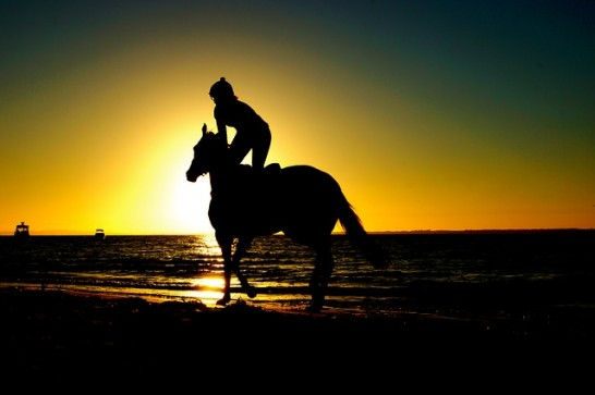 riding-768586_640