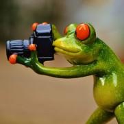 frog-888798_640