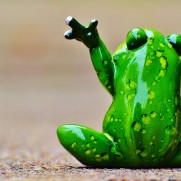 frog-986027_640